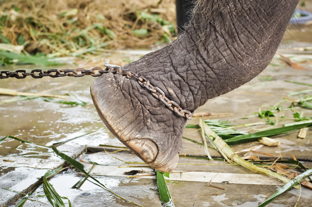 What is your 'ELEPHANT TETHER?'